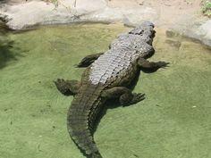 El calor es uno de los grandes enemigos de los animales, por eso, muchos pasan el día en sus estanques.