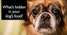 Regardless of the spring of 2007's largest ever pet food recall that resulted in the poisoning and deaths of thousands of dogs and cats across North America, my answer to this question, unlike many of …
