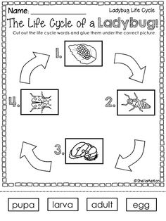 Life Cycle of a Ladybug Preschool Literacy, Kindergarten Science, Preschool Lessons, Science Lessons, Teaching Science, Science Activities, Life Science, Teaching Ideas, Lifecycle Of A Frog