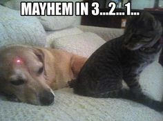 Hilarious joke picture! For the best funny pics with jokes visit www.bestfunnyjokes4u.com/lol-funny-cat-pic/