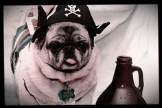 "M.  . Pirates of the Caribbean  "" CAPTAIN JACK PUGSON""  Arrrgh, why is all the rum gone?"