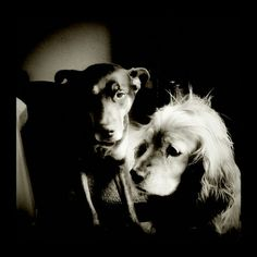 Koko & Kaia deep in thought.