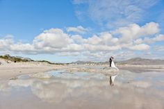 Weddings ‹ Veronique Mills Photography – Cape Town based Wedding Photography