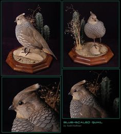 Gamebirds Bird Taxidermy, Wood Sculpture, Wood Carving, Hunting, Owl, Gallery, Pictures, Animals, Exotic Birds