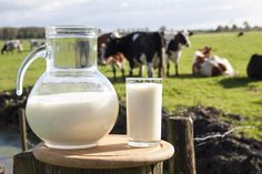 The Sour Facts About Milk: What Every Parent Needs To Know. This article explains the true facts of milk and other dairy products. Unfortunately the dairy industry would like us to believe otherwise. Health And Nutrition, Health And Wellness, Health And Beauty, Beauty Detox, More Beer, Raw Milk, Fresh Milk, Foods To Avoid, Going Vegan