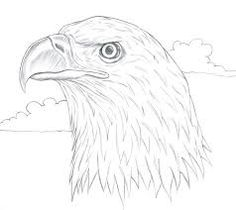 how to draw a realistic bald eagle head art for kids hub cycle