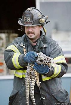 Firefighter, Darryl Weeden, pulls two live lizards from a San Jose reptile store fire. | Shared by LION