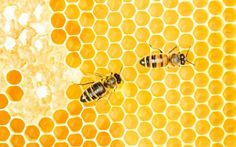 SAVE OUR BEES!! Please...Can Buying Organic Save the Bees