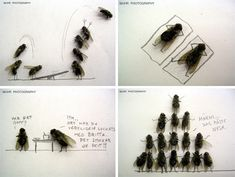 Magnus Mehr is a sick genius for his dead insect photography. Love, total LOL!