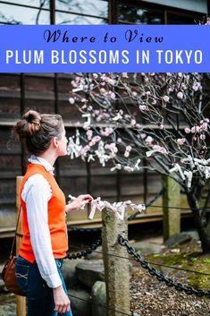 plum-blossoms-tokyo#spring  #Japan #travel #guide #TheRealJapan #Japanese #howtotravel #vacation  #trip #explore #adventure #traveltips #traveldeeper #jrpass  #japanrailpass #travelblog #tips #travelphotography #photography  www.therealjapan.com