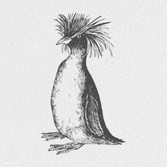 how do html color codes work Penguin Sketch, Fox Sketch, Penguin Drawing, Penguin Illustration, Rockhopper Penguin, Branch Vector, Vintage Penguin, Drawing Wallpaper, Free Hand Drawing