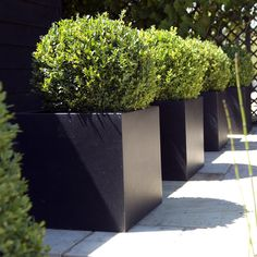 Buy Square planter: Delivery by Crocus