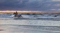 Hoch zu Ross auf Norderney  ►► Unvergessliche Momente sind Ihnen mit einem Ausritt am Strand von Norderney zwischen Nordsee und Dünenlandschaften garantiert! Erleben Sie die Schönheit unserer Insel vom Pferd aus: Zahlreiche markierte Wege führen Sie dabei durch die Dünen der Norderney. Die Pferdehöfe der Insel bieten auch Kinder- und Anfängerkurse an. Hier erhalten Sie alle Informationen.