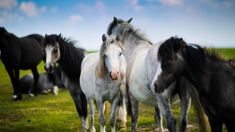 Many factors determine horse age. In this article we will explore some common questions and concerns regarding senior horse care. Read on to learn more. Horse Pictures, Animal Pictures, Welsh Pony, Photos Hd, Horse Treats, Free Horses, Horse Grooming, White Horses, Animals Images