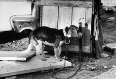 A dog was found dead from starvation and another was reportedly left trapped alone in a crate without food or water at an apartment. Demand justice for these horrendously abused animals.