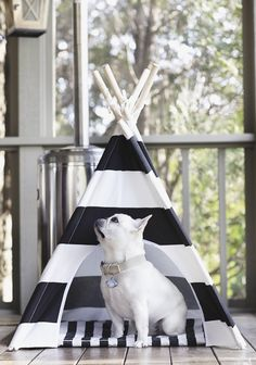 """Click visit site and Check out Hot Frenchie Shirts. This website is outstanding. Tip: You can search """"your last name"""" or """"your favorite shirts"""" at search bar on the top. #Abyssinian #Cat"""