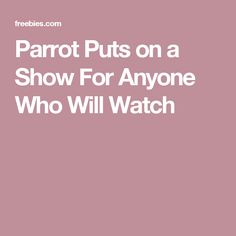 Parrot Puts on a Show For Anyone Who Will Watch