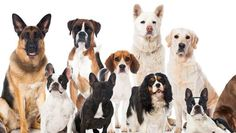 So, you think you're a dog fanatic -- but can you name a breed just by seeing a tiny portion of the dog?