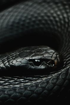 — reals: Black Python   Photographer