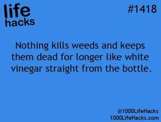 Life Hack life hack #lifehack #killweeds - weeds and vinegar