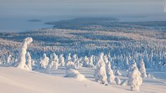 The trees of the Riisitunturi National Park make for dramatic scenery in winter when temperatures well below freezing leaves them coated in condensed frost. The area is popular with cross-country skiers, birdwatchers and photographers.