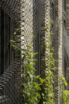 Gallery of Forest Mews / Stolon Studio Ltd - 16