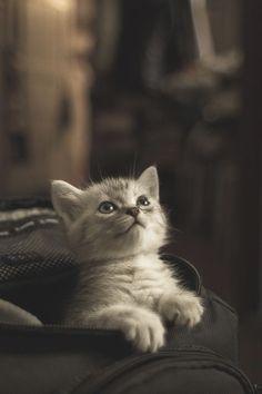 Sweet baby, kitty, kitten, killing, cute, nuttet, pet, adorable, sweet, photograph, photo