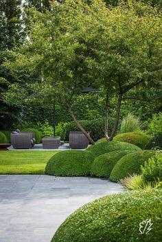 House Landscape, Garden Landscape Design, Modern Landscaping, Backyard Landscaping, Back Gardens, Outdoor Gardens, Garden Sitting Areas, Olive Garden, Modern Garden Design