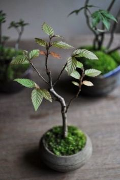 Moss-ball bonsai