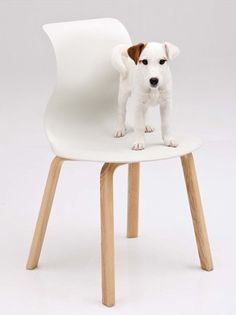 Wooden chair PRO by Flötotto | #Design Konstantin Grcic #chair #dog #pet