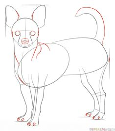 How to draw a chihuahua   Step by step Drawing tutorials