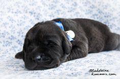 Puppy  www.madeleinekommers.com