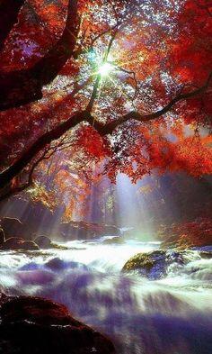 [Our Beautiful World & Universe] - Beautiful World, Beautiful Places, Beautiful Forest, Beautiful Scenery, Landscape Photography, Nature Photography, Science And Nature, Nature Nature, Nature Pictures