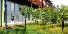 Stormwater Gardens - Wenk Associates :: TAXI Redevelopment