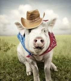 Cowboy Pig, this makes me laugh! lol