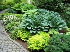 Shaded Garden, Hosta Gardens, Garden Beds, Beautiful Gardens, Harvest, Landscaping, Baby Shower, Shades, Gardening