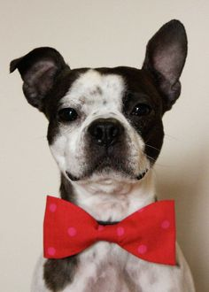 Valentine's Day Dog BowTie      Handmade by by littlebluefeather, $12.00