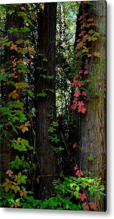 Autumn Vines In The Woods Acrylic Print By Trinket