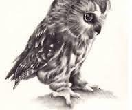 Znalezione obrazy dla zapytania rysunki sowy