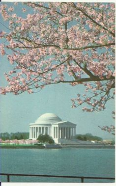 Vintage Washington, DC cherry blossom postcard. I've been but I would love to go back