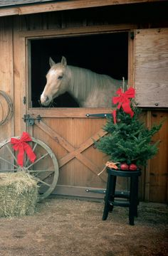 Horse In Barn Door  Even four footed creatures celebrate Christmas.