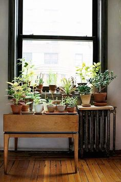 pretty plants...live plants are important in what I think of as an hygge decor.