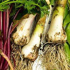 22 vegetable harvesting tips | Green garlic | Sunset.com
