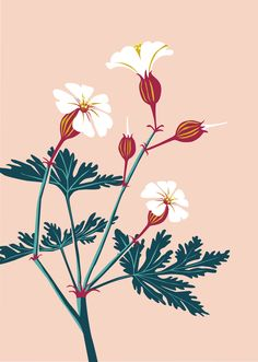 The typical sent of the cranesbill always remembers me of summers in my childhood. Illustrator, Always Remember Me, Summer Flowers, My Childhood, Birds, Plants, Animals, Decor, Animales
