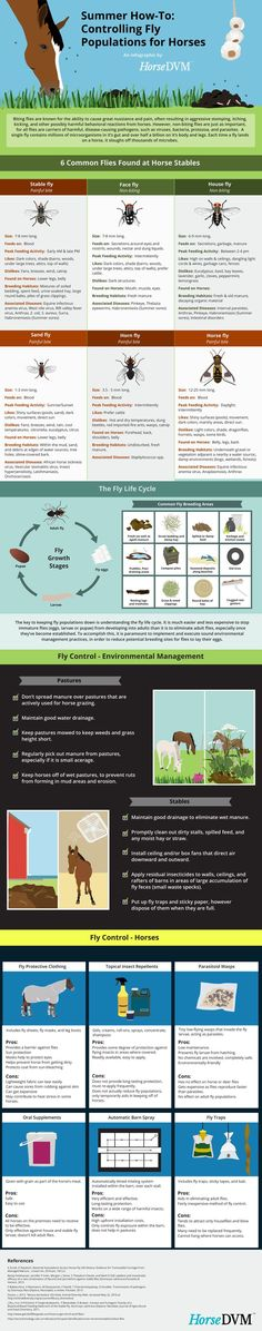 HorseDVM - Controlling Fly Populations around Horses