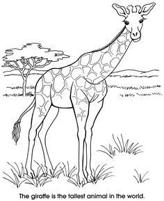 Realistic Giraffe Coloring Pages from Animal Coloring Pages category. Printable coloring pages for kids you could print and color. Check out our selection and printing the coloring pages for free. Zoo Animal Coloring Pages, Coloring Book Pages, Coloring Pages For Kids, Free Coloring, Giraffe Colors, Zany Zoo, Animal Outline, Zoo Animals, Animal Drawings