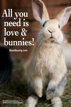 All you need is love & bunnies!!
