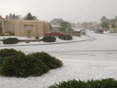 NMSU Plant Clinic: Hail pounds parts of Dona Ana County