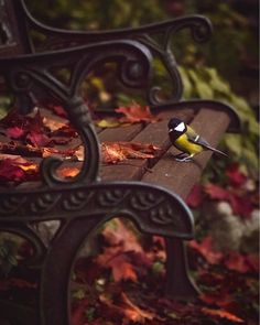 Raindrops and Roses: Photo Raindrops And Roses, Learn Islam, Learn Quran, Relax, Fall Pictures, Cute Birds, Nature Animals, Baby Animals, Funny Animals