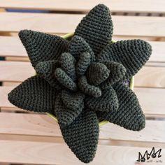 arMi-arMa: Blog: Cactusss!